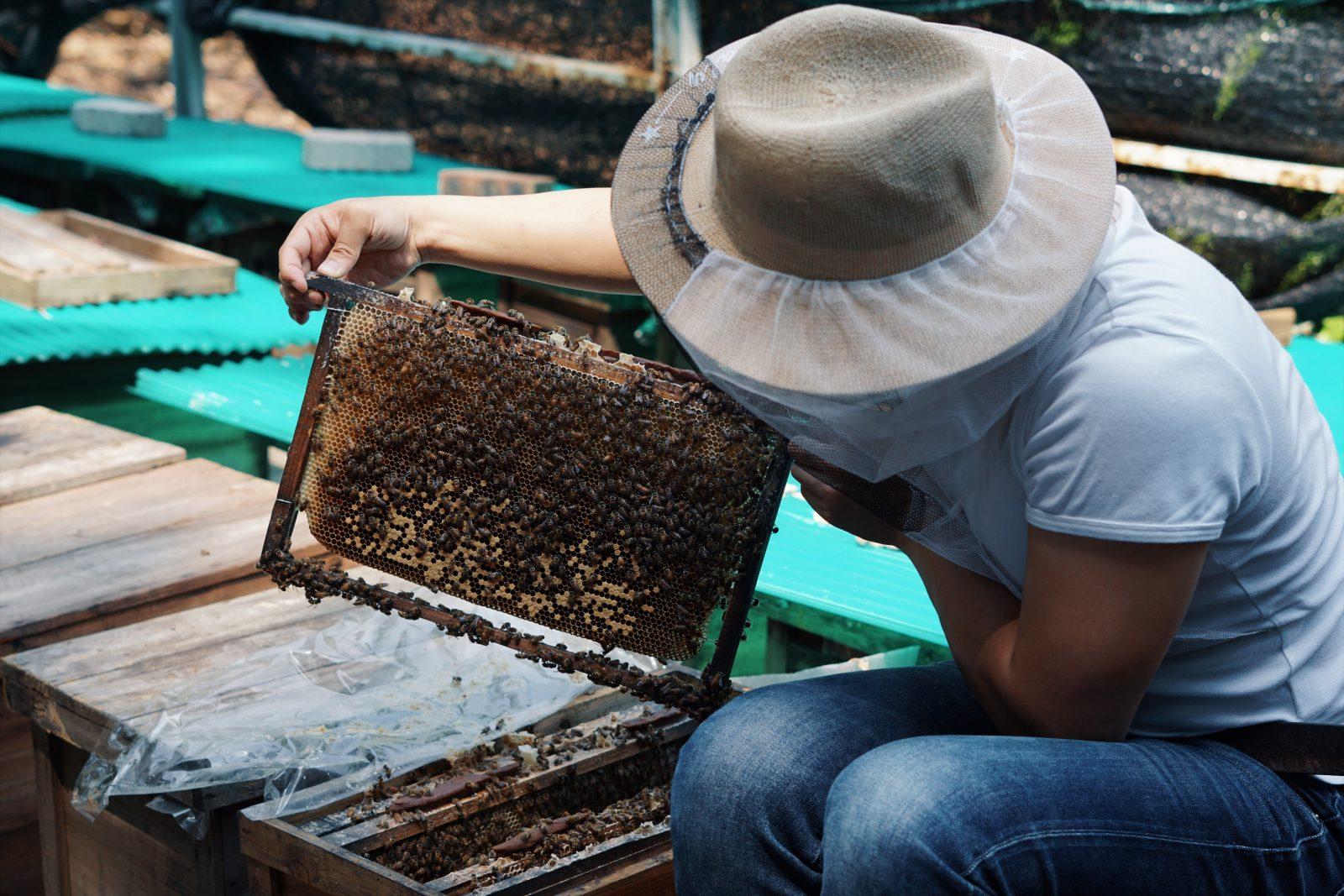 香港養蜂師傅